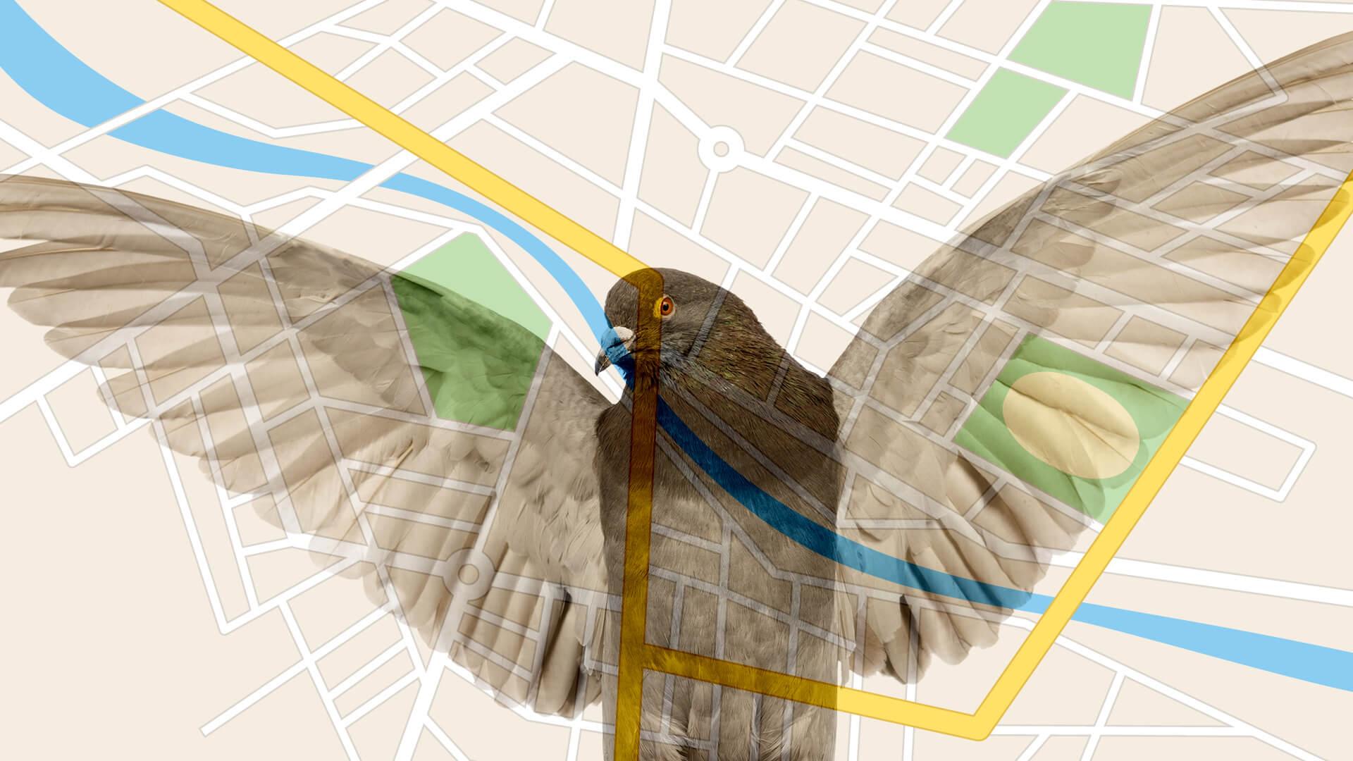 """Los expertos opinan sobre la actualización """"Pigeon"""" de Google dirigida a mejorar los resultados de búsqueda local"""