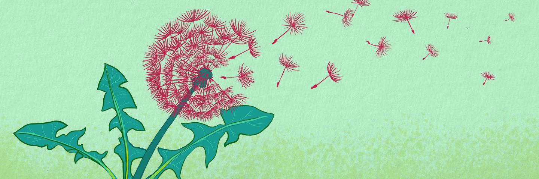 Illustration of a dandelion