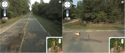 El auto de Google Street View mata a Bambi y luego elimina las imágenes